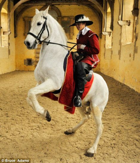 Strictly come prancing! It's Britain's one and only horse