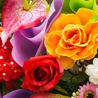 Beautiful Rainbow Variety Flowers Facebook Cover - Nature