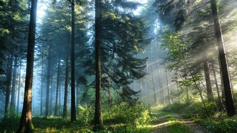 Forests may store less carbon in a warmer planet | ACES
