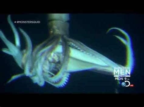 Giant Squid (Architeuthis) footage, January 27, 2013 - YouTube