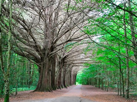 Coole Park in County Galway, Best Forest Parks in Galway