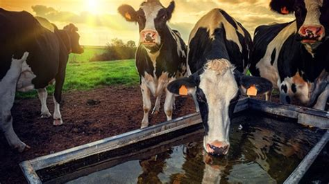 Water troughs are key to toxic E
