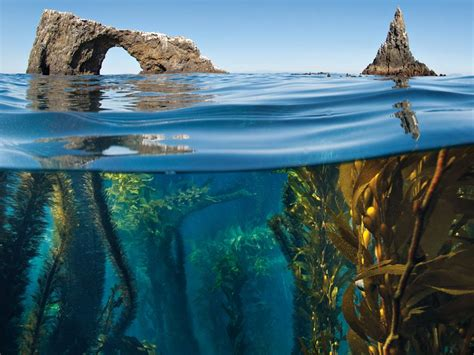 Biome | National Geographic Society