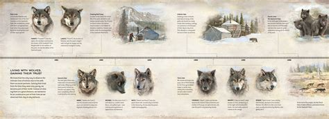 Meet the Pack - Living with Wolves