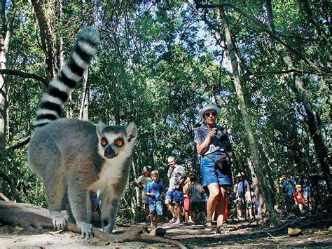 Leaping Lemurs in Madagascar | Goway