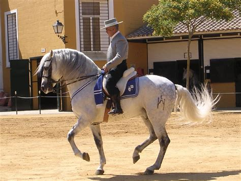 The Andalusian or Spanish Horse