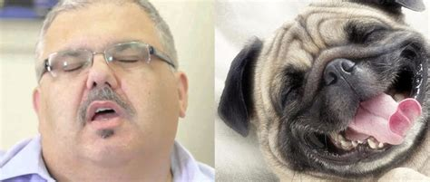 Maltese Politicians Paired With Their Perfect Dog Breed