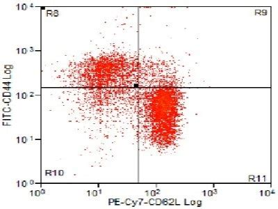 Best Anti-Mouse CD62L Antibody For Flow Cytometry Analysis