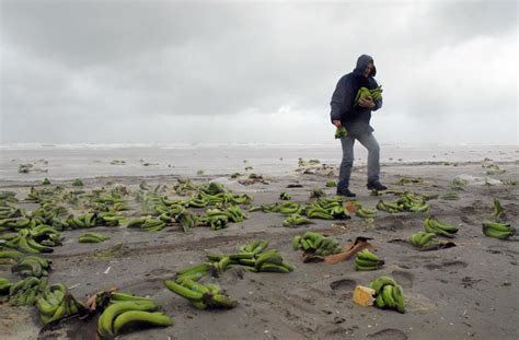 Strangest Things That Washed Up On Beaches | HuffPost