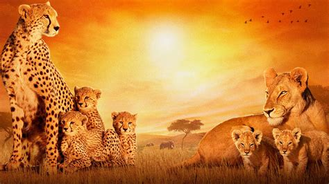 African Cats Wallpapers   HD Wallpapers   ID #13445