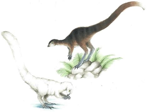 Leaellynasaura - Facts and Pictures