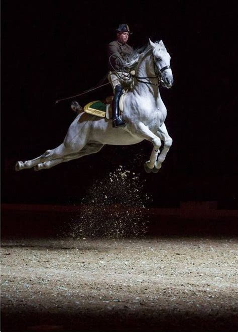 Great photo of a Lipizzaner doing a capriole