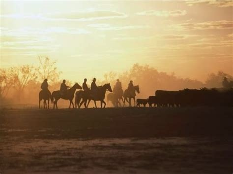 Finding Work In Australia: Working On Cattle Stations