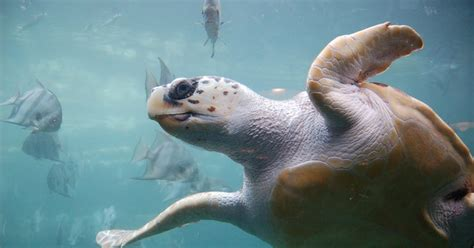 Navigational 'Magic' of Sea Turtles Explained | WIRED
