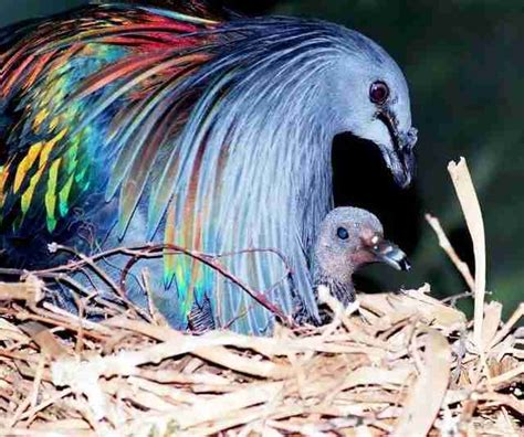 People Are Killing These Birds To Make Jewelry Out Of Them