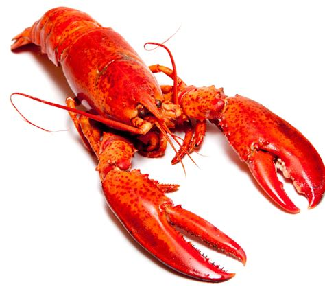 Lobster Pictures - Kids Search