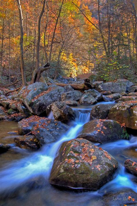"""""""South Mountains State Park, North Carolina"""" by Jane Best"""